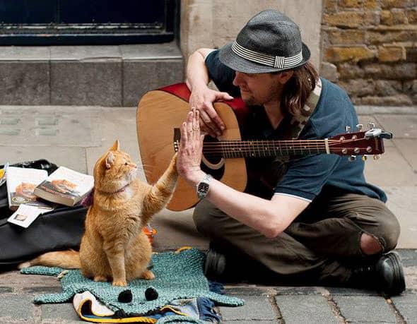 Bob-the-Street-Cat-and-James-Bowen-image-bob-the-street-cat-and-james-bowen-36279730-590-459